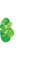Four-leaf clover 2