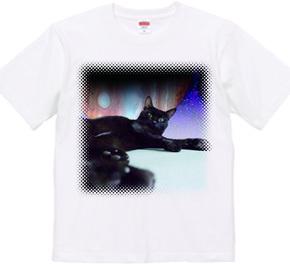 猫「テンテン+All cats」