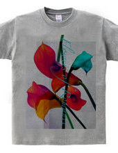 calla-Flowers of Romance-