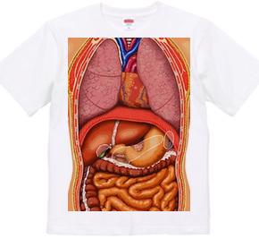 anatomical chart