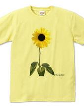 ひまわり SUN FLOWER-002