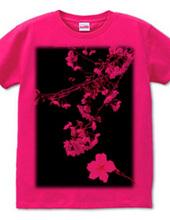 さくら(夜桜)-002