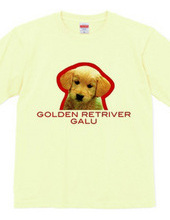 GOLDEN RETRIVER 1