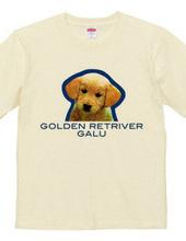 GOLDEN RETRIVER 2