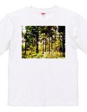 101-woods