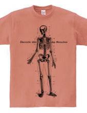 人体透視図