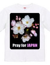 (両面印刷) 春よ来い・桜