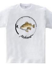 MEBARU_CK7