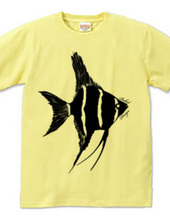 angelfish 01