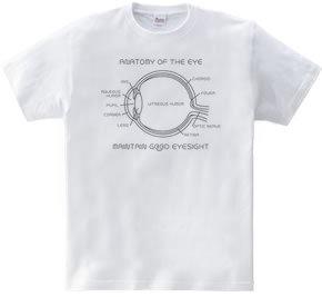 目の構造 ◎u◎
