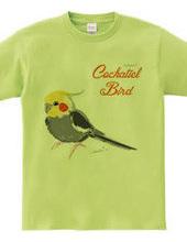Normal Cockatiel Bird