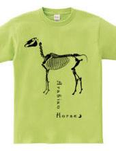Arabian Horse Skeleton