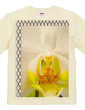 orchid-ラン
