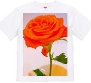 untitled - Flower - rose (12)