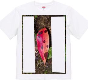 Leaf - Plant - Nature  (3)