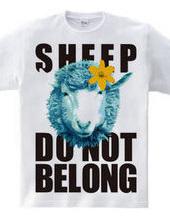 sheepCOLOR