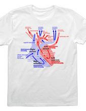 the heart medical genealogy (English) ba