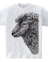 t.sheep