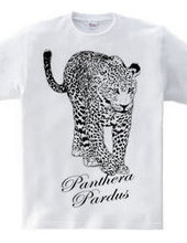 Leopard _ 01
