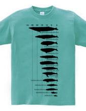 クジラのサイズ2
