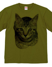 子猫-HARU