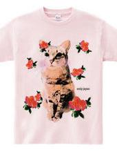 CAT and rose