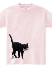 Black and white stray cat walk