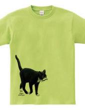歩く白黒のら猫