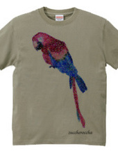 Parrot