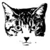 のら猫の顔(2階調)