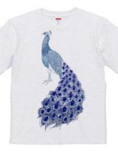 peacock [A]
