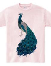 peacock [D]