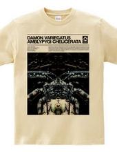 Damon variegatus