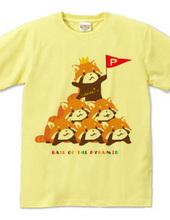 RED PANDA レッサーパンダの組み体操 まろ眉