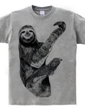 Honey-toed sloth
