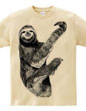 Honey-toed sloth