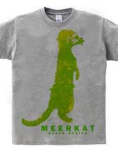 meerkat 02