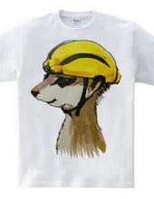 Meerkat wearing Lemon helmet