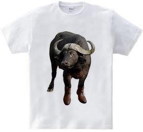 洒落た水牛