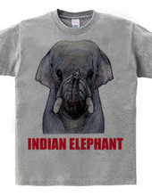 INDIAN ELEPHANT インドゾウ