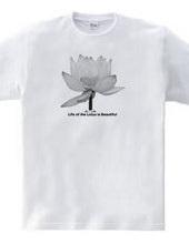 Beautiful Lotus lives
