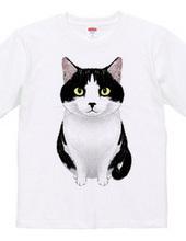 見つめる白黒猫