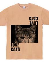 野良猫大好き。