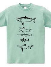 いろんなサメ