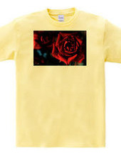 271-rose