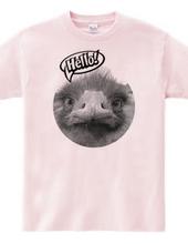Hello, ostrich