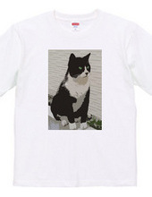 Tuxedo Cat Black&White