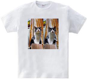 八百屋猫ピー/塀の上