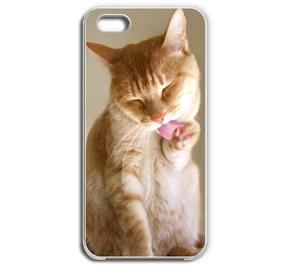 顔を洗うエルマウ iPhone