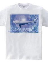 Whales swim [MAJESTIC]
